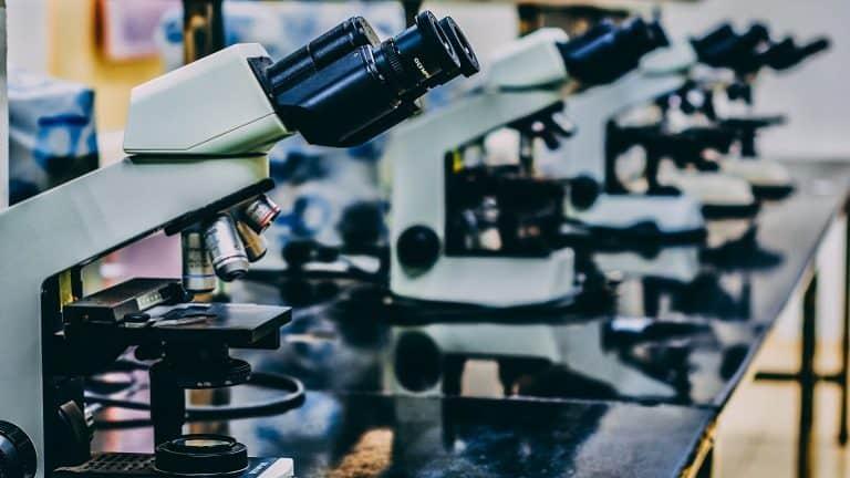 Mikroskop test die besten mikroskope im vergleich
